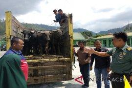 TNI Aceh Tengah gagalkan pencurian kerbau