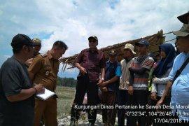Kunjungan Dirjen PSP ke sawah Desa Marok Kecil