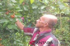 Kementan perhatian terhadap kebun rakyat Kalsel