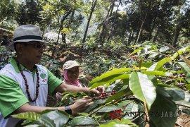 Moeldoko kunjungi perkebunan kopi Puntang
