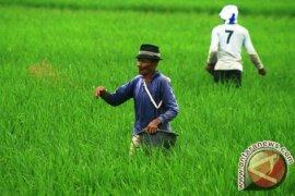Pangan Picu NTP Banten Turun 1,31 Persen