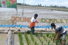 Kementan: Kebutuhan herbisida masih tinggi