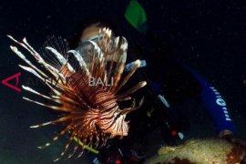 """Fotografer mancanegara ikuti kompetisi """"underwater"""" di Bali"""