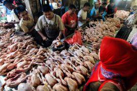 Kaltim butuh 12 juta ekor ayam hingga Idul Fitri