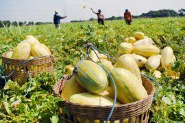 Program READSI perkuat kelembagaan petani