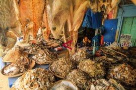 Pemuda Dataran Kempas budidayakan ikan kebun sawit (video)