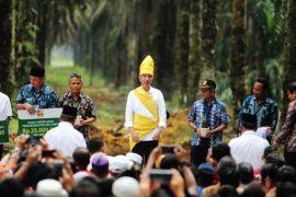 10.223 hektar kebun sawit masyarakat Kalteng akan diremajakan