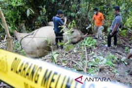 Gajah jinak mati di CRU Serbajadi