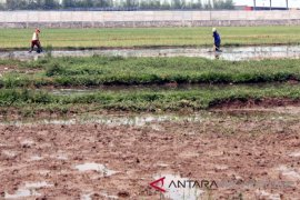 Pemkab Karawang perbaiki ratusan titik irigasi tertier