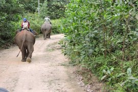 Lagi, Gajah ngamuk di Lampung Barat