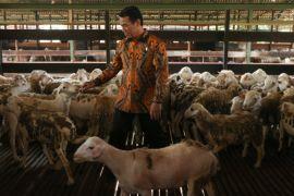 Menteri Pertanian dorong peningkatan ekspor domba