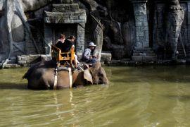 """""""Bali Zoo"""" suguhkan gajah mandi massal"""