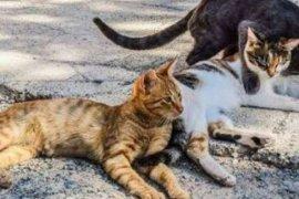 Video viral pria pemakan kucing hidup sedang diungkap polisi