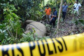 Gajah mati ditemukan di pedalaman Aceh