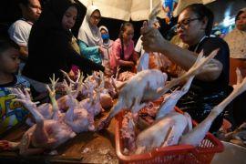 AGP pengaruhi kenaikan harga daging ayam