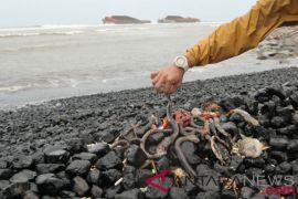 BNPB : biota laut mati di Kabupaten Kepulauan Tanimbar tidak terkait gempa