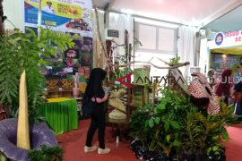 Bengkulu gelar Festival Bumi Rafflesia 2018