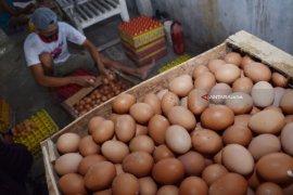 Harga telur ayam ras di Ternate kembali normal