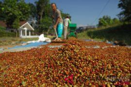 Petani Lampung ekspor kopi 20 ton