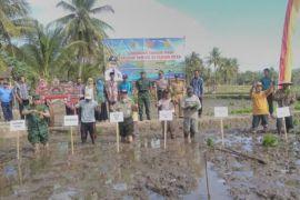Optimalisasi pemanfaatan air di Gunungkidul untuk genjot produksi padi