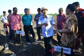Gubernur Pastika: 1.200 hektare tebu sejahterakan petani