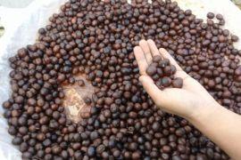 Tantangan berbisnis kedai kopi di Indonesia