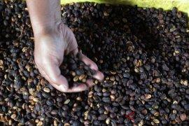 Kopi Manglayang tembus pasar Maroko dan Australia