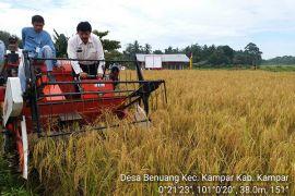 Produksi padi di Kampar capai 8 ton/ha berkat Jarwo Super
