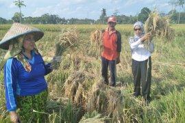 Dinas Pertanian HST optimalkan lahan lebak