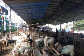 Masjid Al Azhar terima 195 hewan kurban