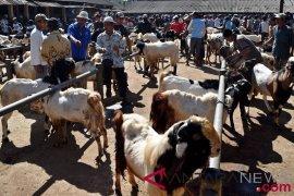 Perdagangan hewan kurban kota Tangerang  mencapai 9.105 ekor