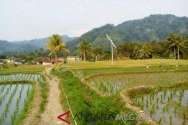 Lahan pertanian di Nyalindung terserang hama blas