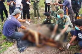 Penangkapan pelaku pembunuhan orangutan diapresiasi