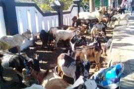 Penyaluran hewan kurban di masjid Ternate berkurang