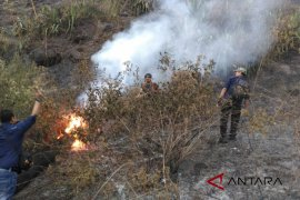 BKSDA selidiki penyebab kebakaran hutan Gunung Guntur