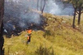 Kebakaran Hutan Gunung Lawu Meluas ke Ngawi