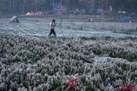 Iklim ekstrem menjadi pemicu peningkatan kelaparan global