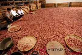 Kementan dorong petani produksi bawang merah kualitas ekspor
