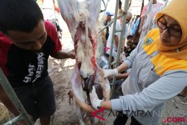 135 hewan kurban Bantul idap cacing hati