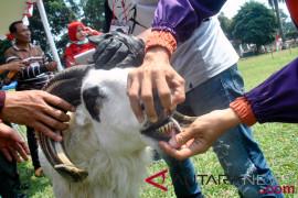 Jawa Barat lepas 200 pemeriksa hewan kurban