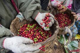 Pak Aleh, petani-pengusaha kopi di Gunung Tilu