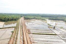 300 hektare lahan kebun sawit Mukomuko dicetak jadi sawah pada 2020