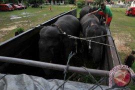 Mengawal gajah sumatera dengan GPS colar