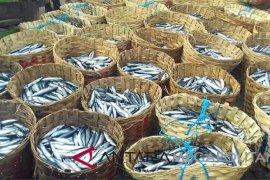 Penjualan ikan laut di Karawang menurun akibat peristiwa pesawat jatuh