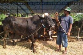 Sukabumi siap pasok kebutuhan daging warga Jakarta
