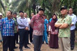 Gubernur Kalteng matangkan penyambutan presiden tanam perdana sawit