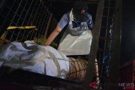 Penjerat harimau sumatera di Riau terancam penjara lima tahun