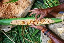 Festival Pesta Ulat Sagu Kombay pertama di Papua