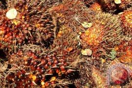 Agro Indomas Lestarikan Hutan Dalam Pengolahan Sawit