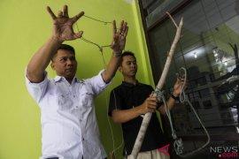 Jerat Pembunuh Harimau Sumatera